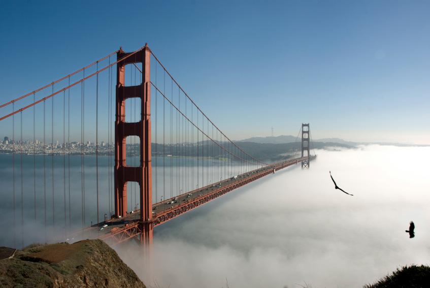 San Francisco / Stirling Says – Balboa | Black with Sap